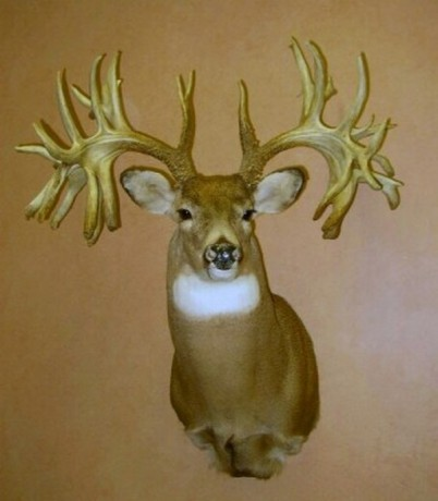 missouri-monarch-the-world-record-non-typical-whitetail-buck-01